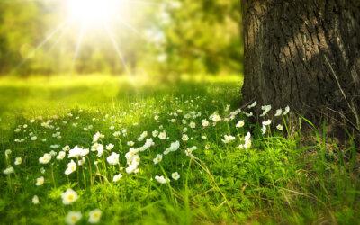 Mensch, Natur und Umwelt schätzen und schützen