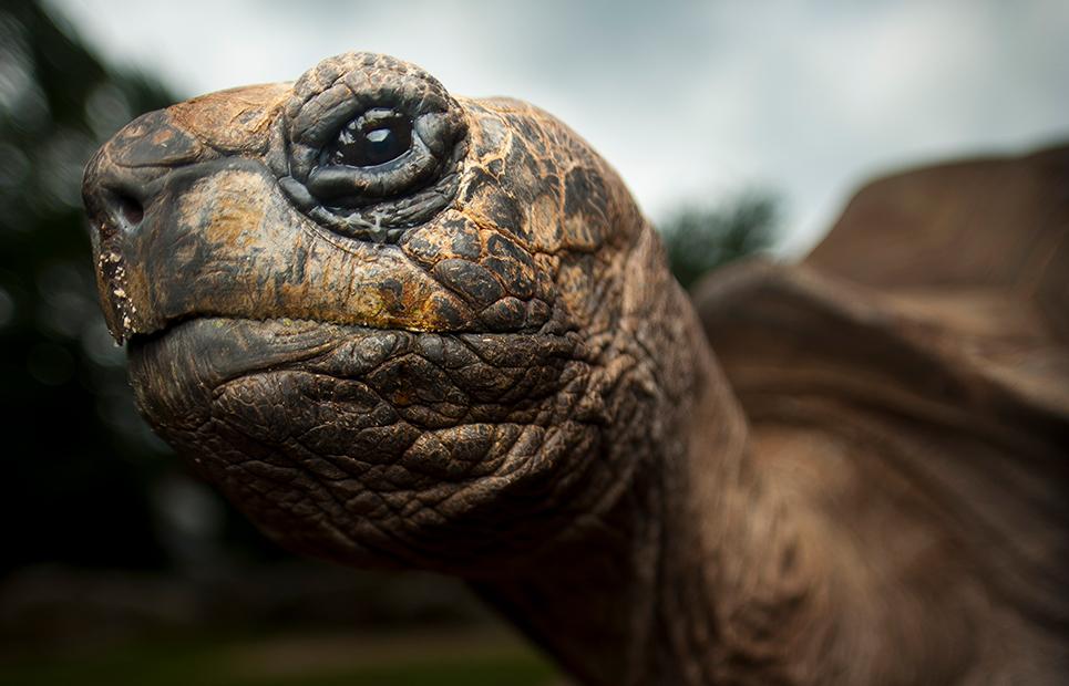 Schildkröte in Nahaufnahme