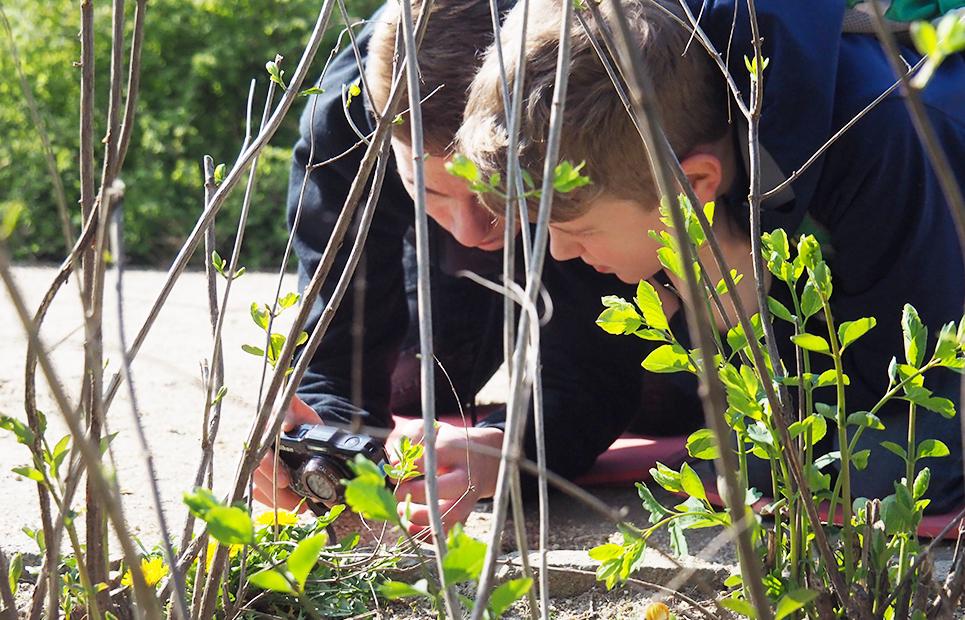 Sommerferienkurse: Was ist Natur?